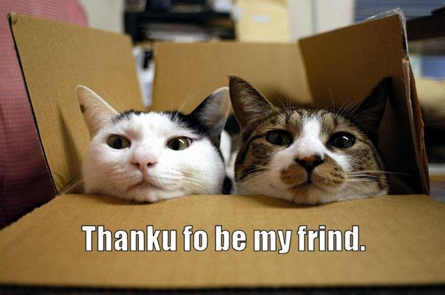 Przyjaciele i partnerzy